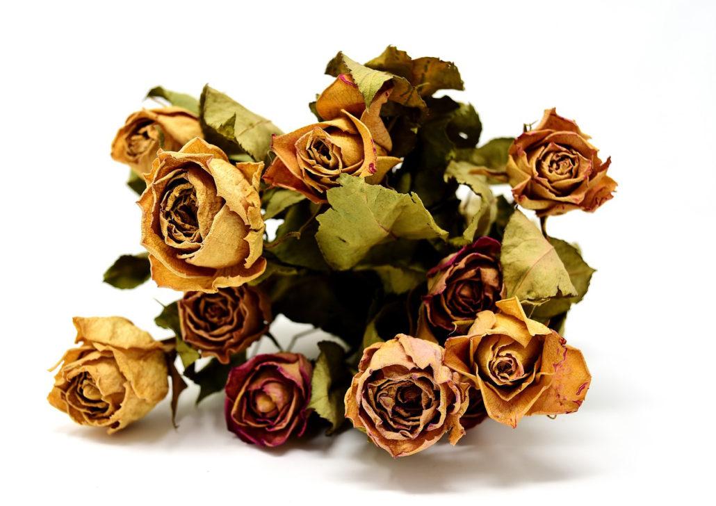 Fotografie: sušené květy