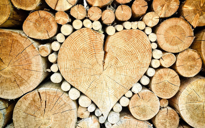 Fotografie: palivove drevo